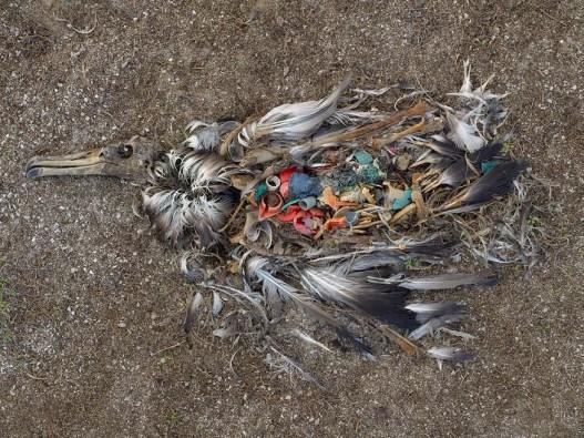 plastic2bird
